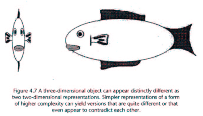 two two-dimensional perspectives of a fish